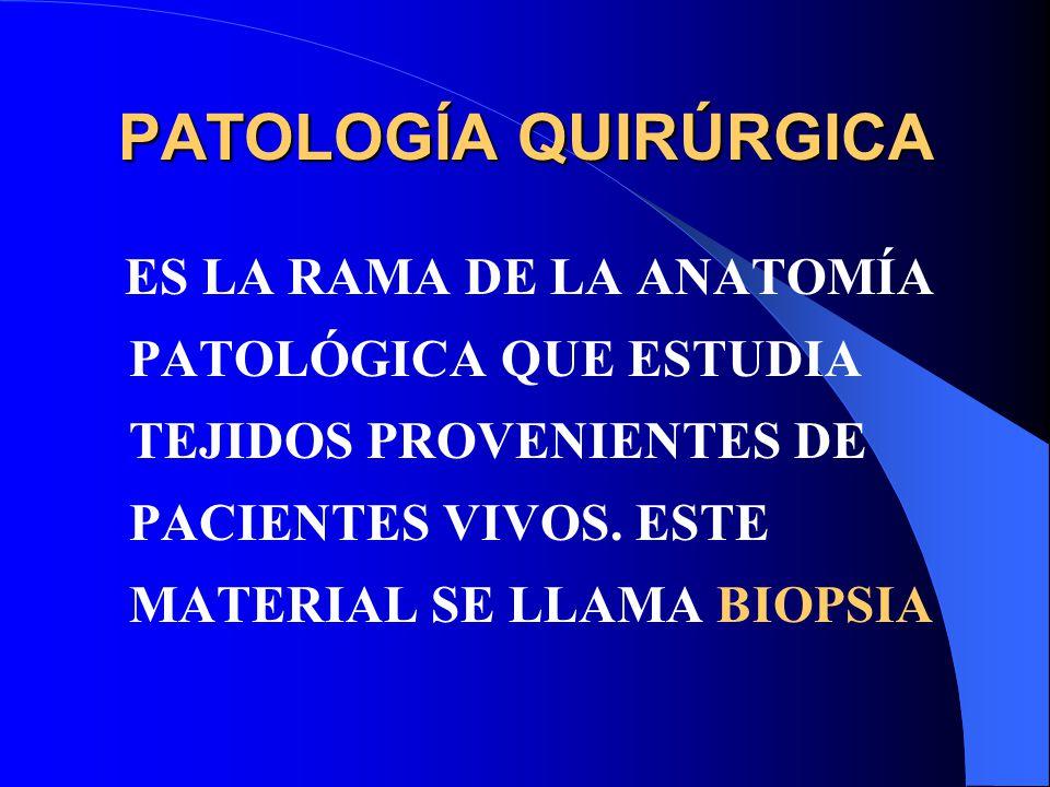 Hermosa Cuál Es La Anatomía Patológica Bosquejo - Anatomía de Las ...