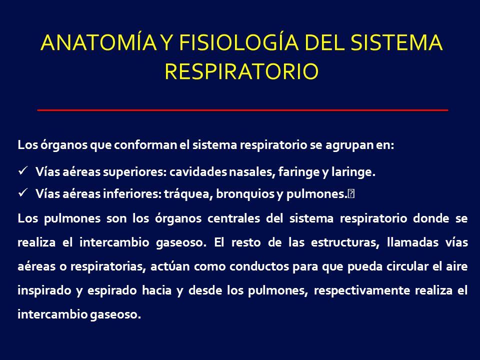 Magnífico Anatomía Y Fisiología Normal De Los Pulmones Colección de ...