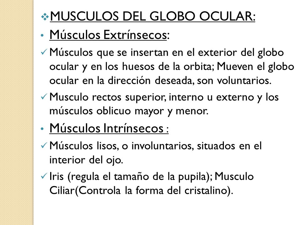 Lujoso Músculos Oculares Anatomía Ornamento - Anatomía de Las ...