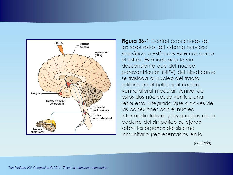 CAPÍTULO 36 Interacciones entre el sistema nervioso - ppt descargar