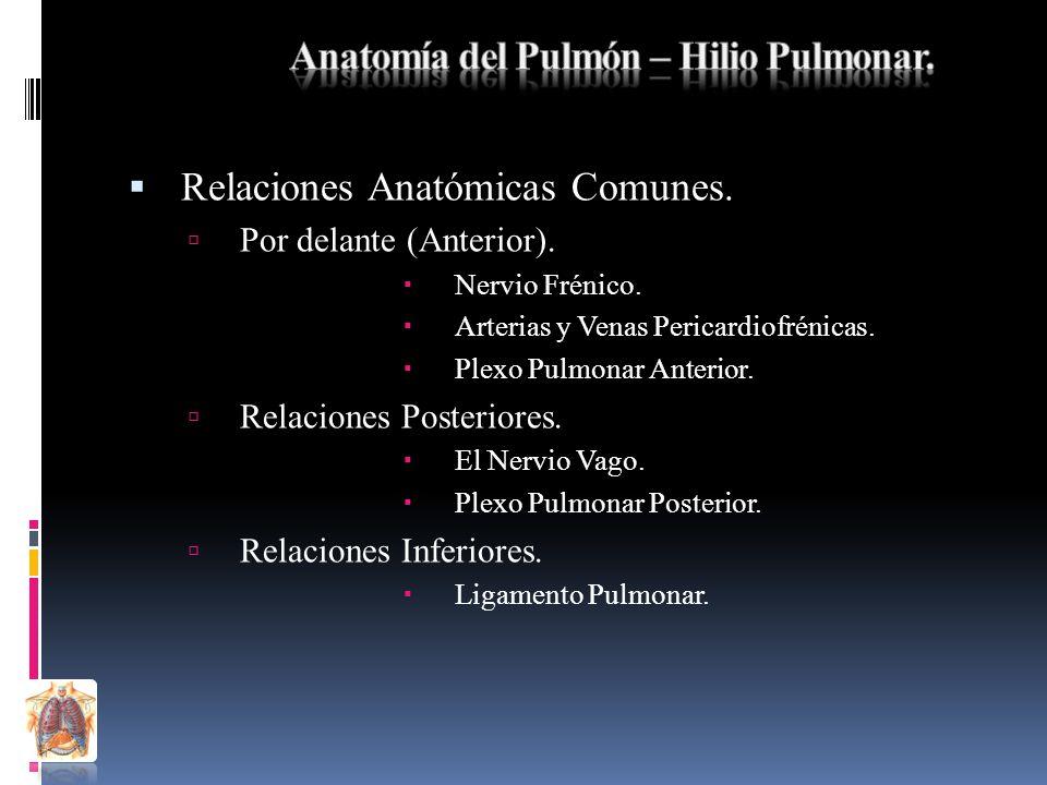 Anatomía Sistema Respiratorio. - ppt descargar