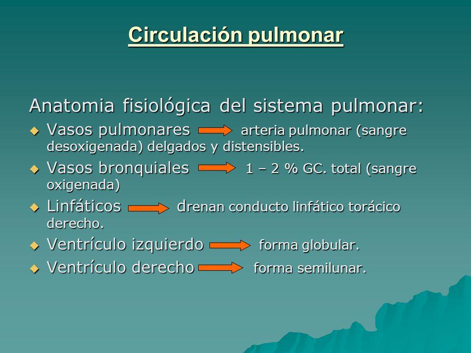 Circulación pulmonar Anatomia fisiológica del sistema pulmonar ...