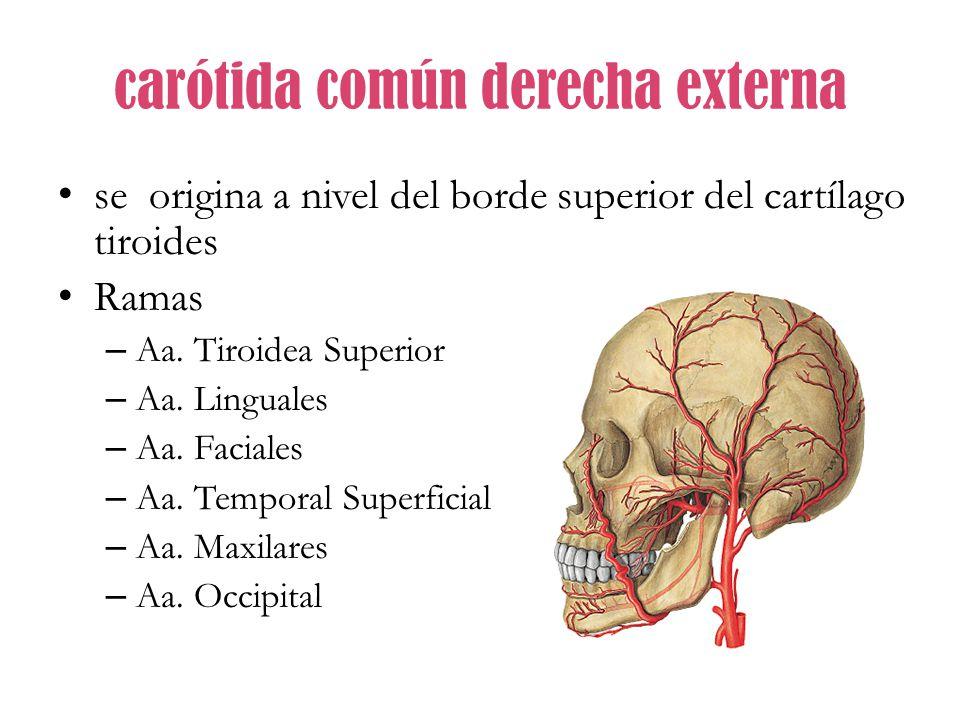 Sistema Arterial. - ppt video online descargar