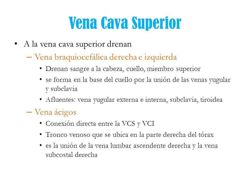 En La Vcs - SoftwareMac