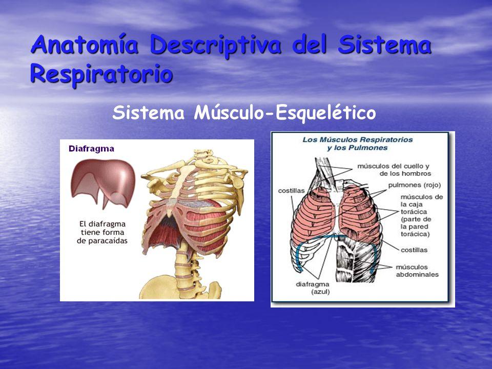 SISTEMA RESPIRATORIO. - ppt video online descargar