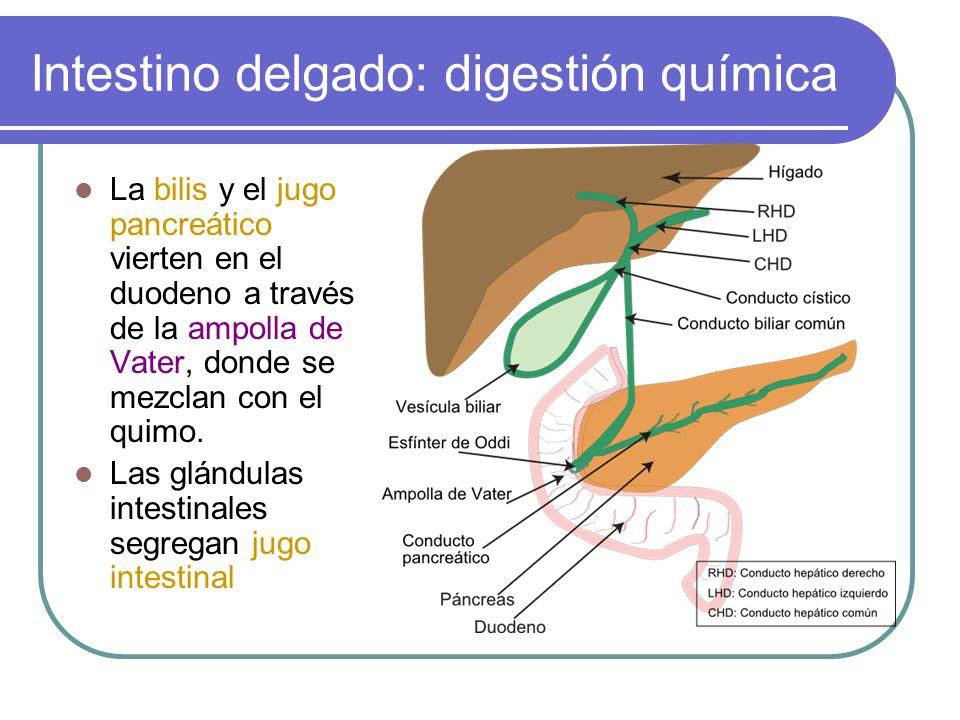 Anatomía y fisiología del Aparato Digestivo - ppt video online descargar