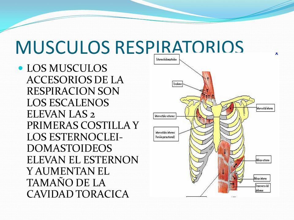 FISIOLOGIA RESPIRATORIA - ppt video online descargar
