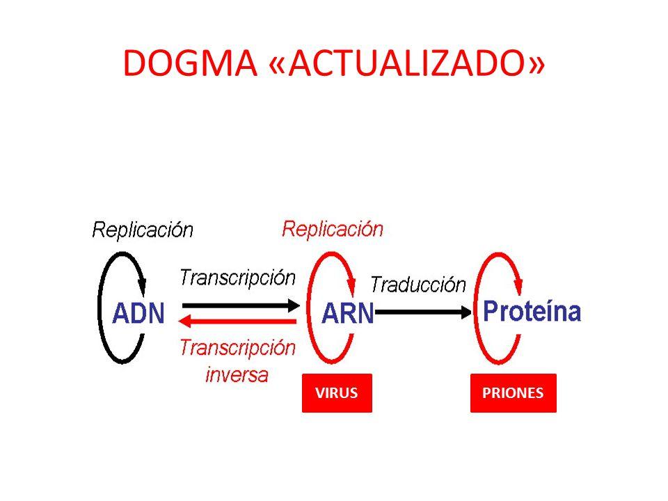 Mecanismos De Replicación Transcripción Y Traducción En