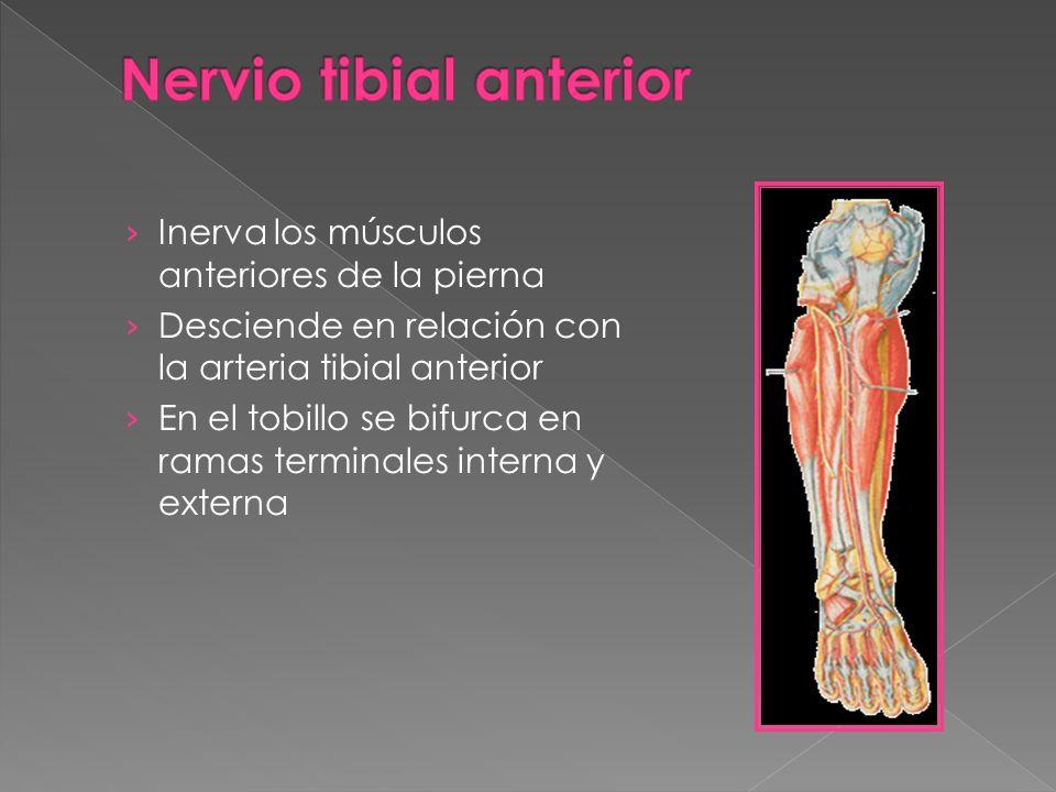 Músculos Miembro Inferior - ppt video online descargar