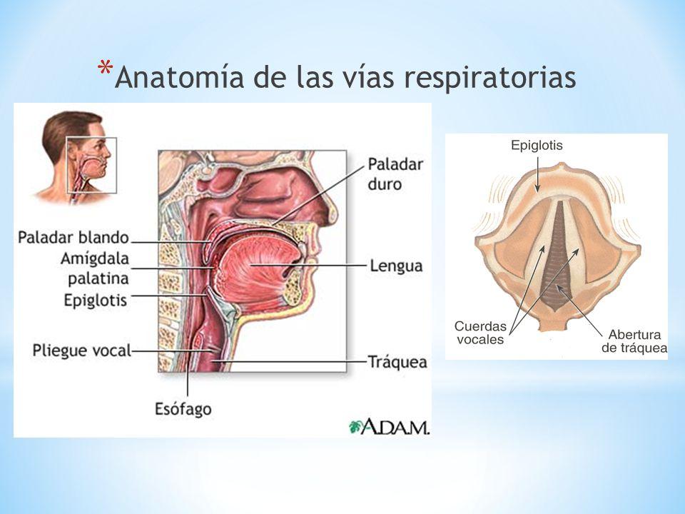 UNIDEP sistema cardiorespiratorio introduccion - ppt descargar