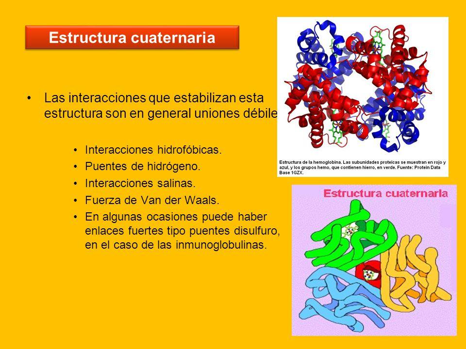 Las Proteínas Ppt Descargar