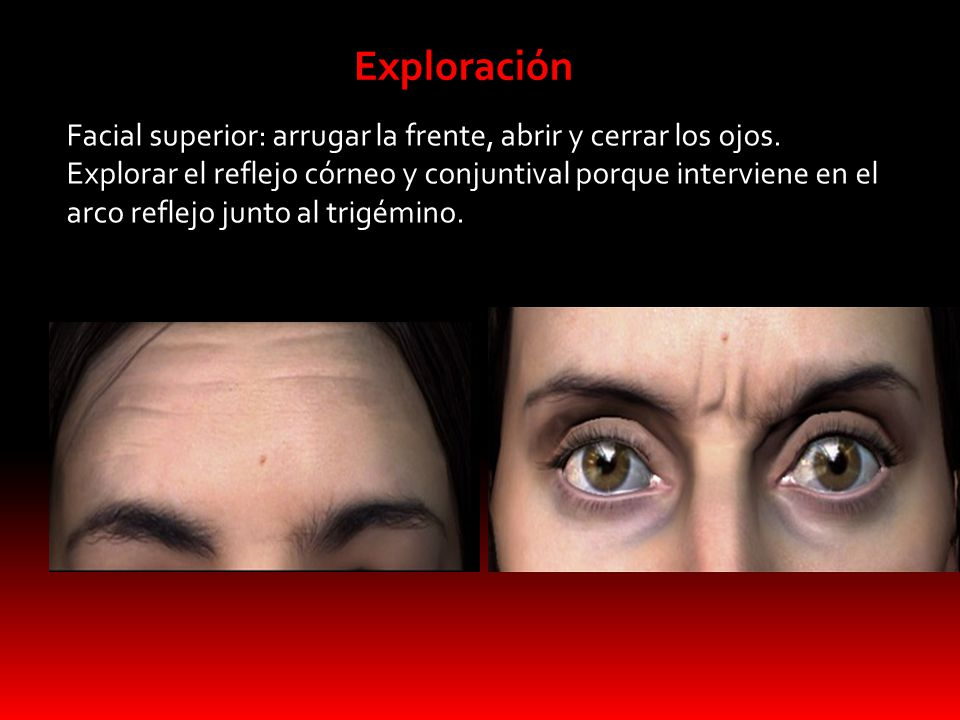 "Nervio facial 2DO. ""C"" ANATOMIA DEL SISTEMA ESTOMATONAGTICO - ppt ..."