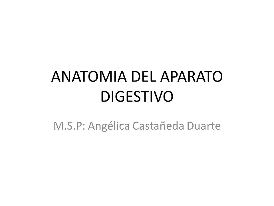 ANATOMIA DEL APARATO DIGESTIVO - ppt descargar