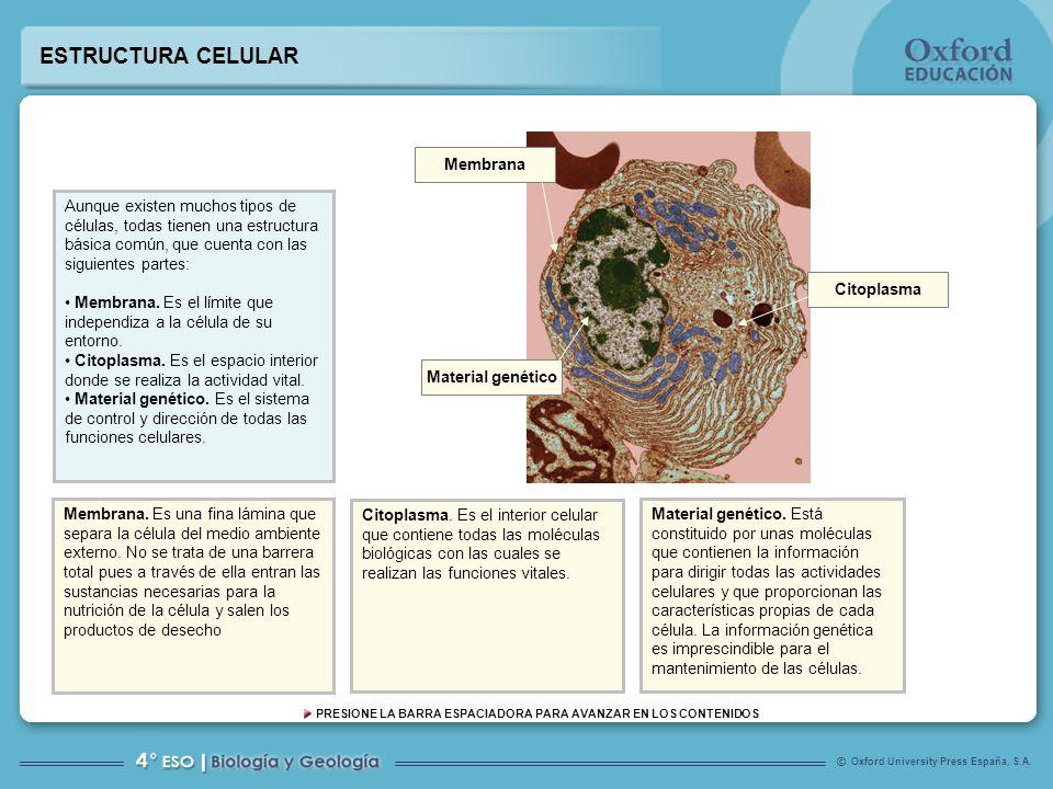 Funciones Y Estructura De Las Células Ppt Video Online