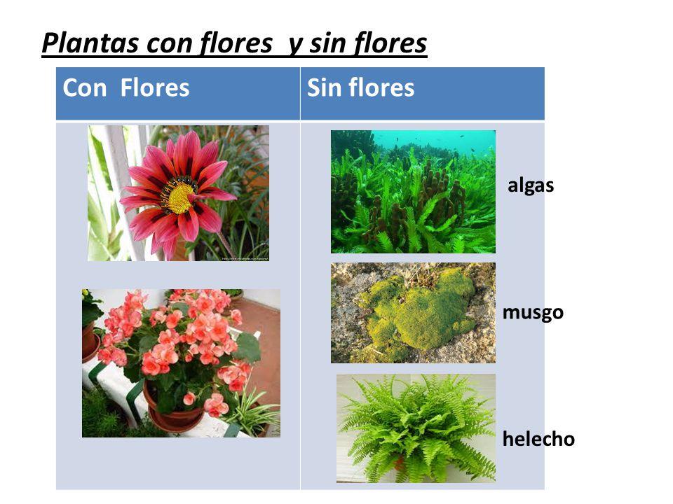 Resultado de imagen de plantas con flores y sin flores