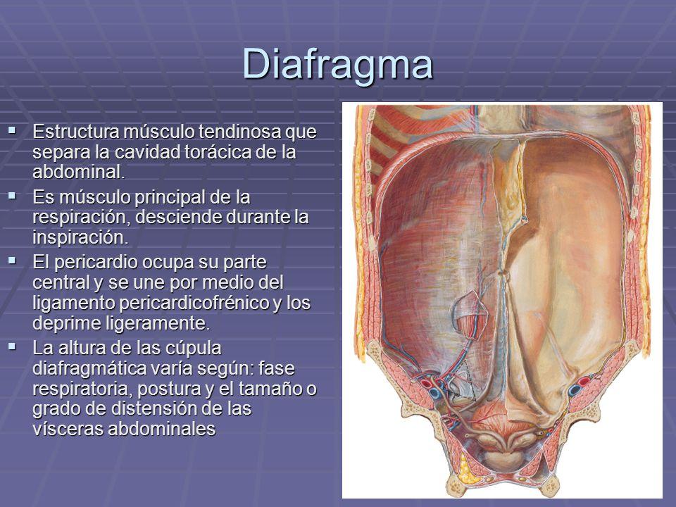 Dra. Marianela Jiménez Brenes UCIMED - ppt descargar