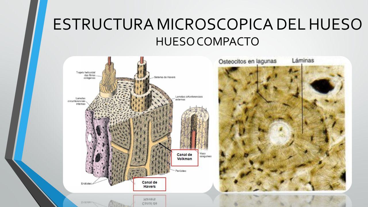 SISTEMA OSEO Tortora, Gerard Jerry. Principios de anatomía y - ppt ...