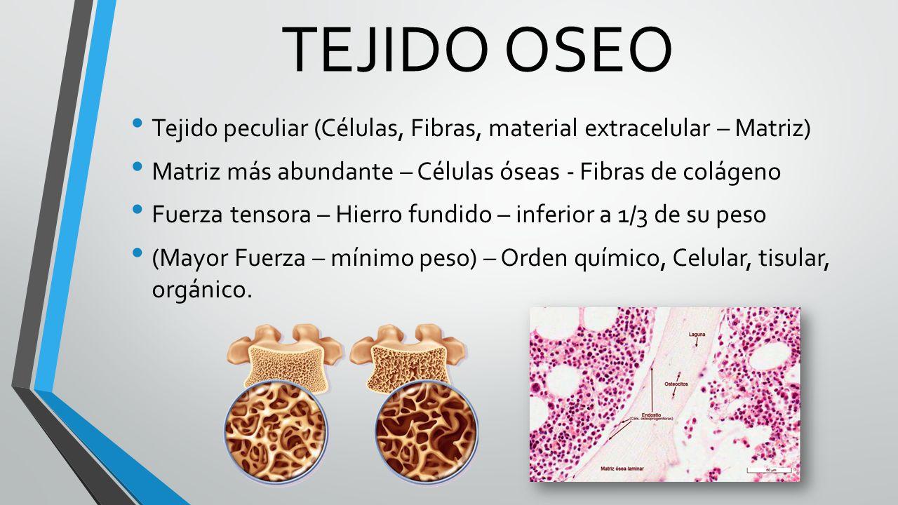 SISTEMA OSEO Tortora, Gerard Jerry. Principios de anatomía