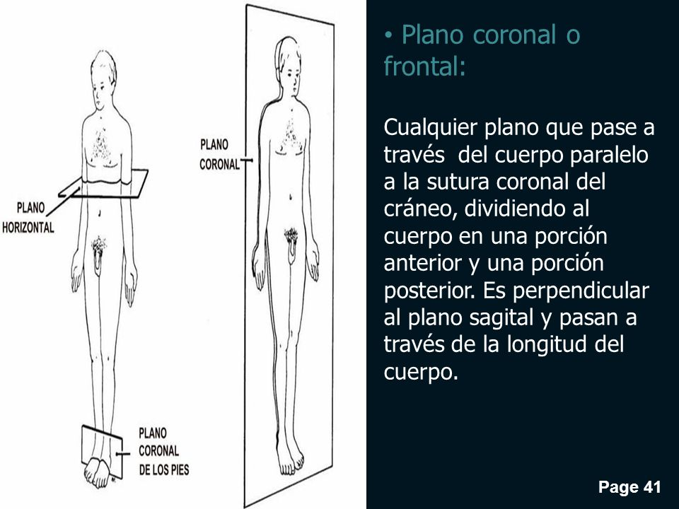 Increíble Anatomía Plano Frontal Imágenes - Imágenes de Anatomía ...