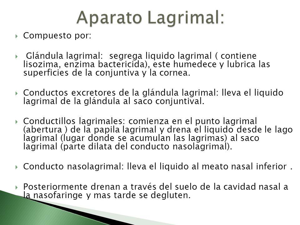 Universidad de Ciencias Médicas. Manuel Soto Gamboa. - ppt video ...