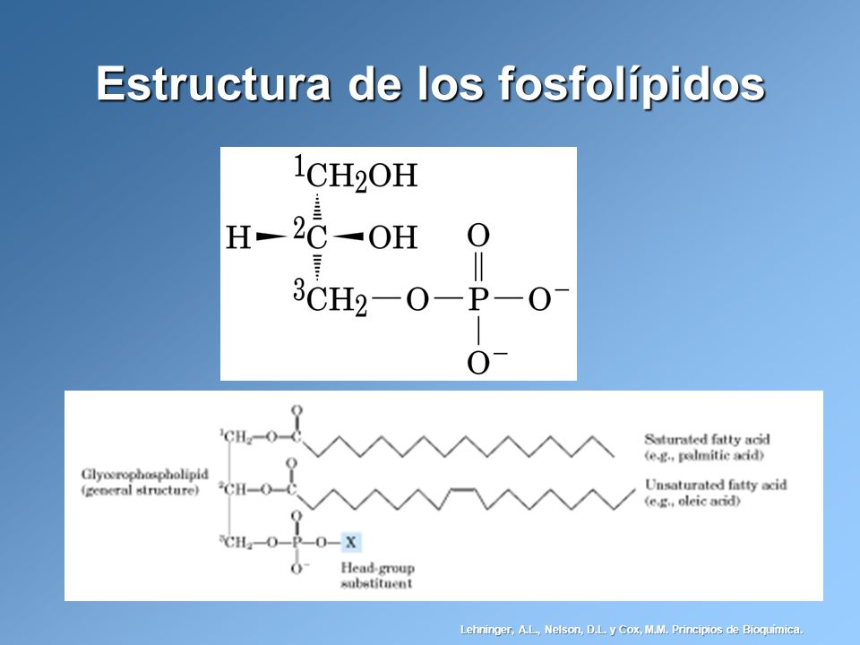 Lípidos Introducción Estructura Molecular Y Comportamiento