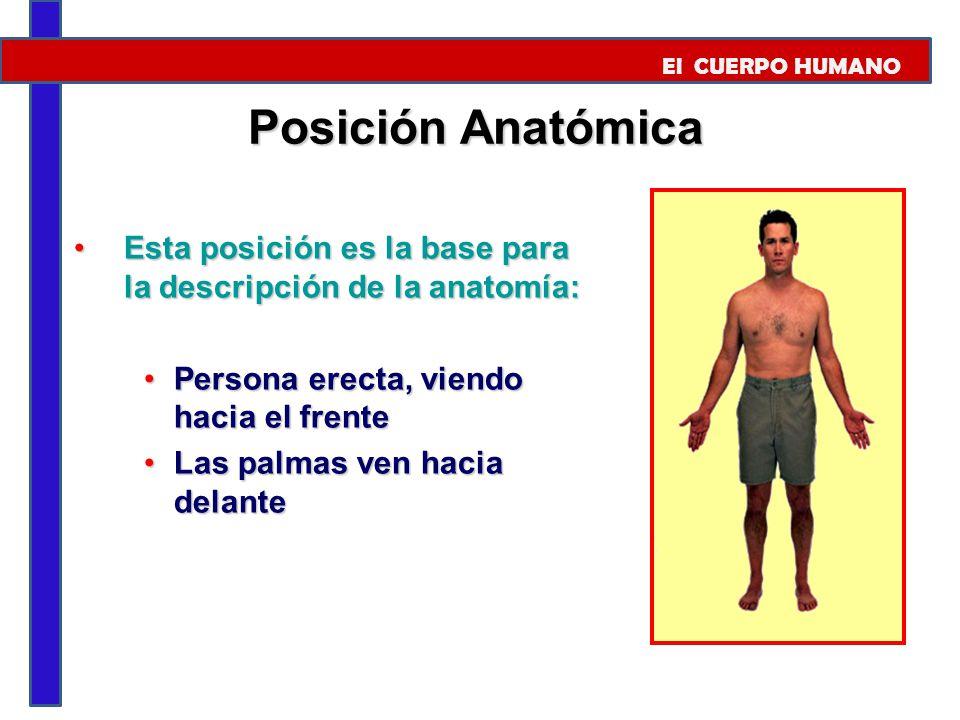 El CUERPO HUMANO El Cuerpo Humano. - ppt video online descargar