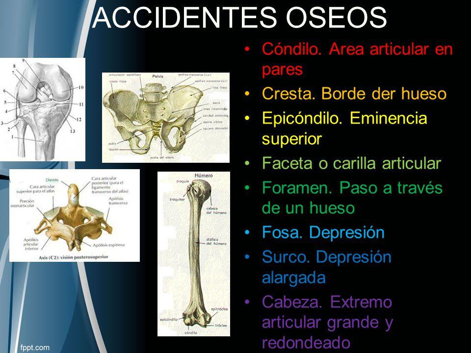 Huesos, Articulaciones y Músculos - ppt video online descargar