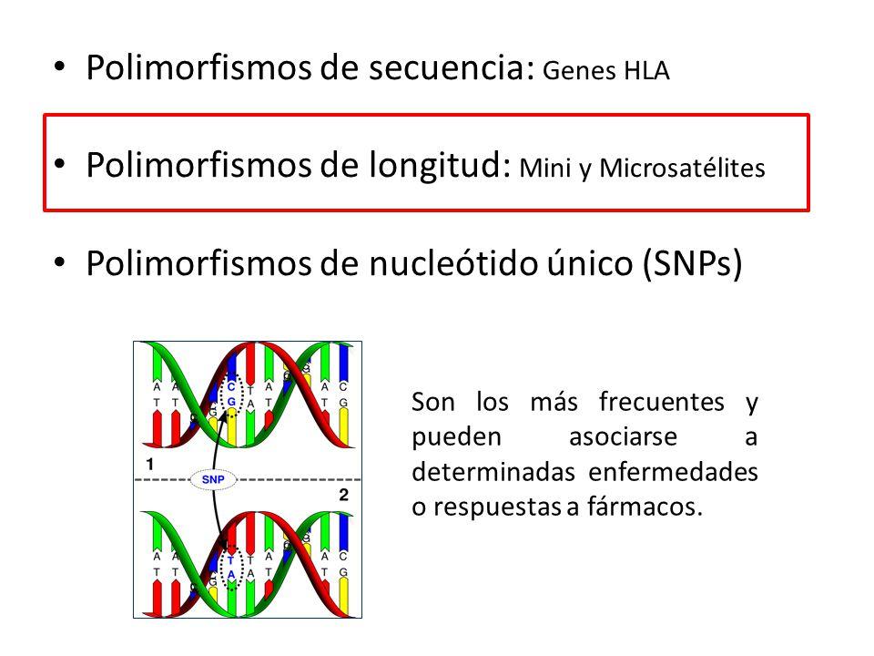 Resultado de imagen para polimorfismo en secuencia