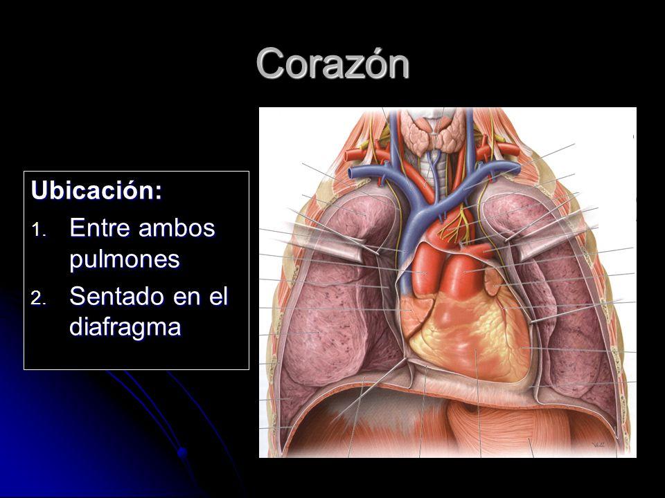 Puntero De Ubicación Con Un Corazón: Sistema Circulatorio Sanguíneo Y Linfático.