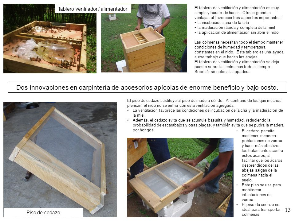 Un vistazo a la carpintera apcola ppt video online descargar
