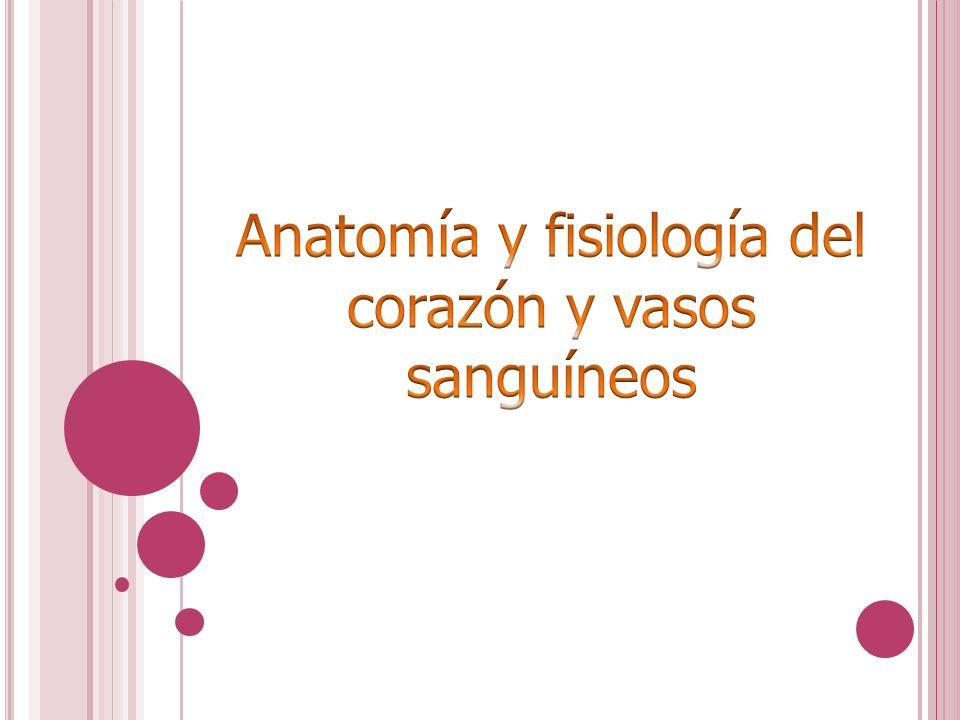 Anatomía y fisiología del corazón y vasos sanguíneos - ppt descargar