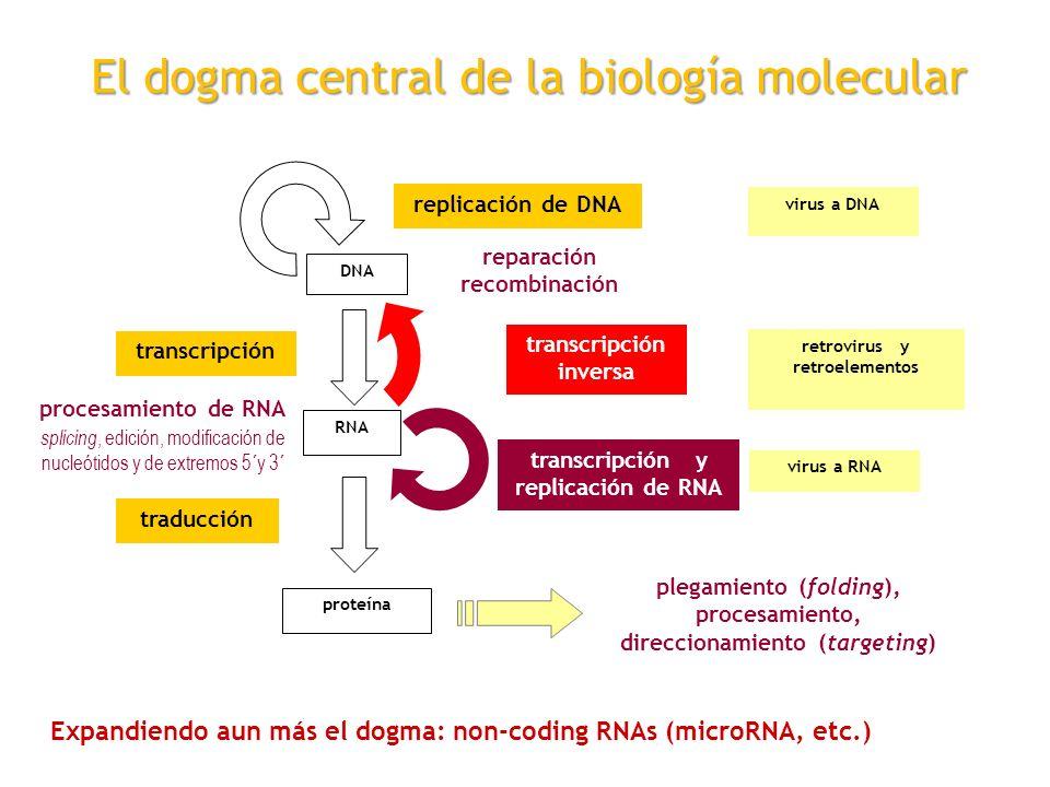 Genetica Molecular Universidad Nacional De Quilmes Ppt