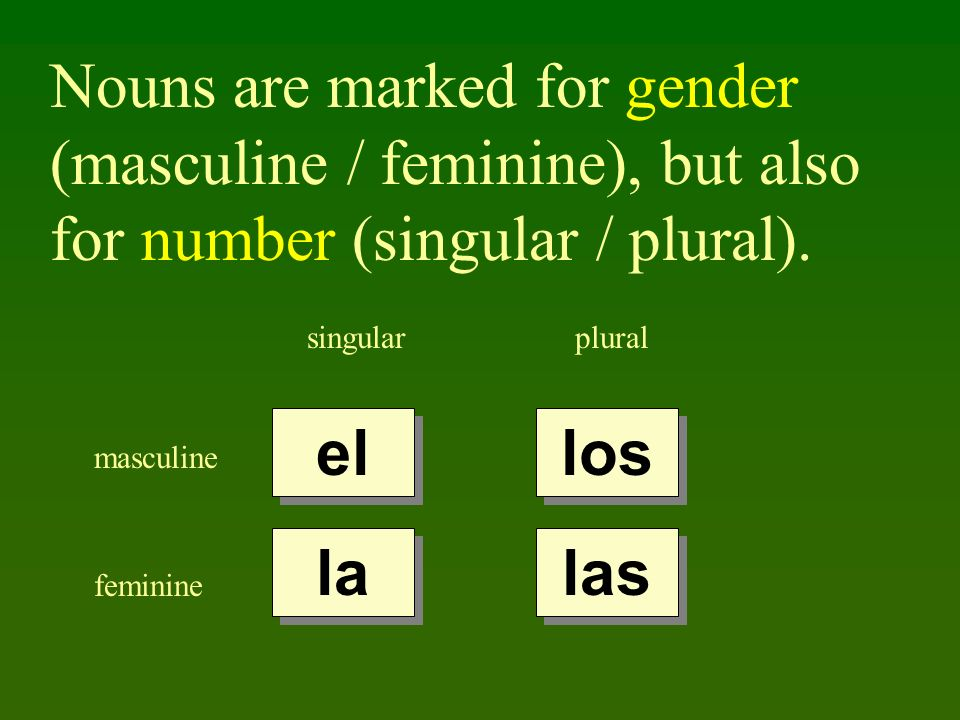 Nouns are marked for gender (masculine / feminine), but also for number (singular / plural).