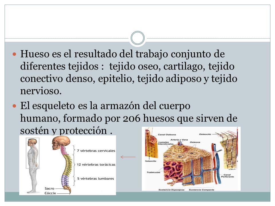 Anatomia y fisiologia humana Alumno: Pacheco Herrera d.s - ppt descargar