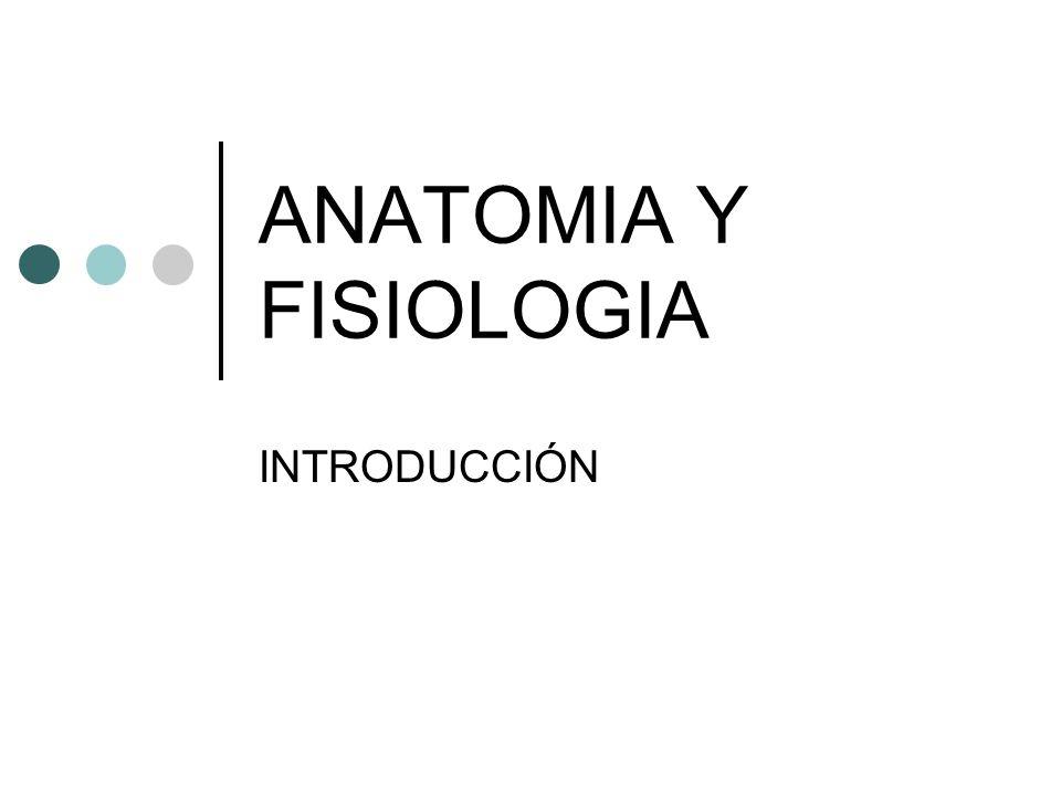 Cuestionario 1.- ¿De qué ciencia son ramas la Anatomía y la ...