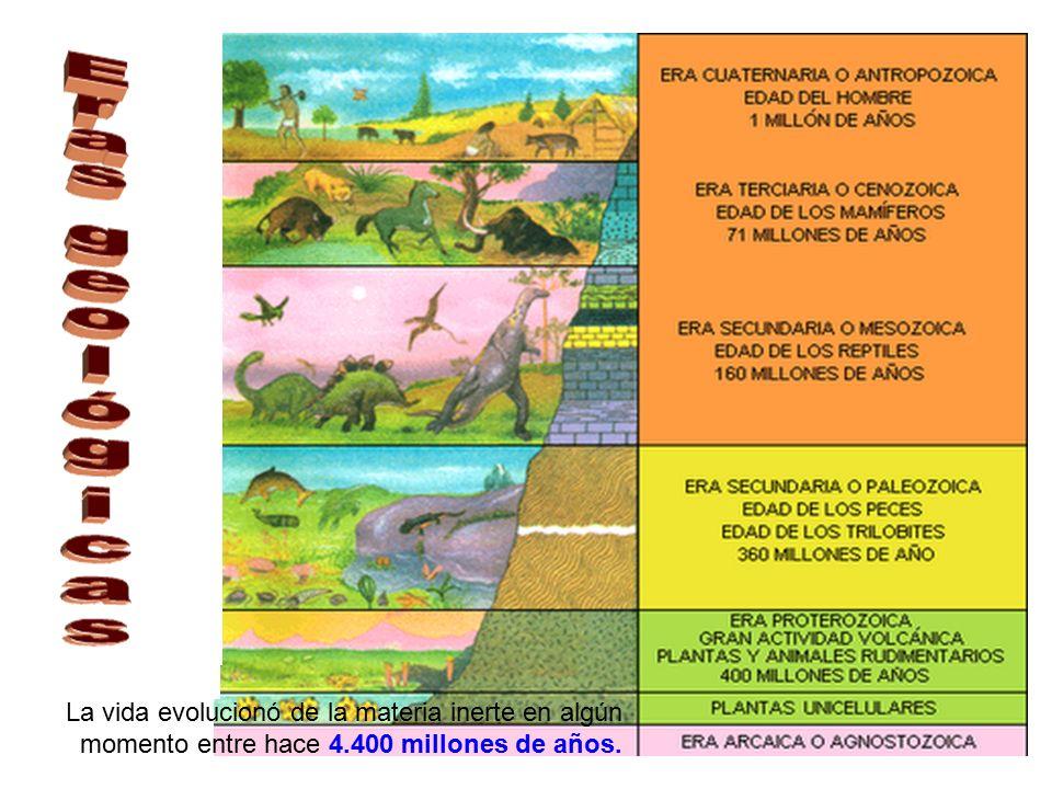 EL GENOMA Y LA EVOLUCIÓN - ppt descargar