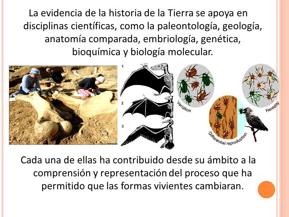 Único Evidencia De La Evolución De La Anatomía Bosquejo - Anatomía ...