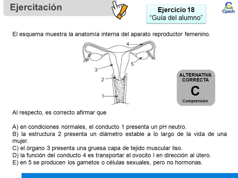 Contemporáneo Diagrama De Sistema Reproductivo Viñeta - Anatomía de ...