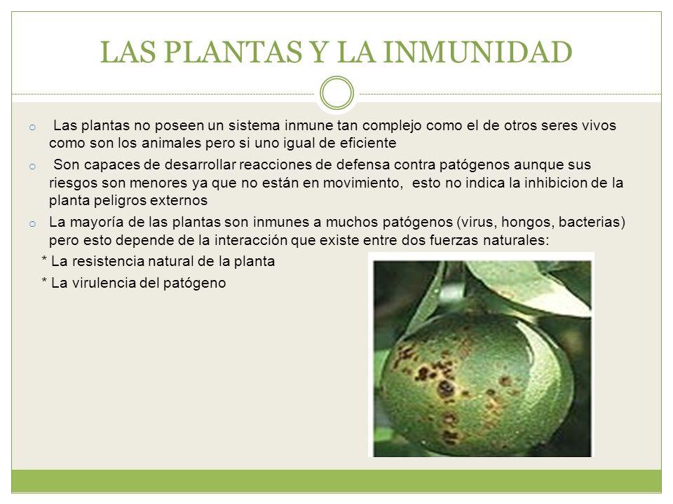 Resultado de imagen para sistema inmune de la planta