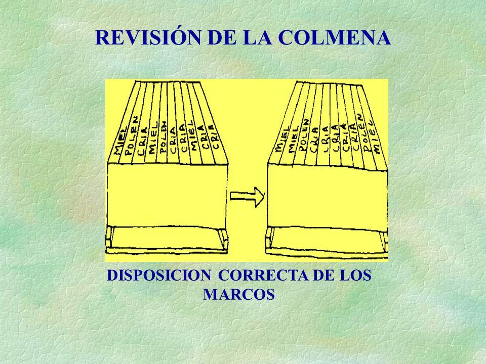 INTRODUCCION A LA APICULTURA MODERNA - ppt video online descargar
