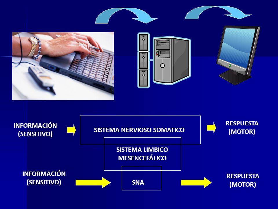 Clasificación anatómica y funcional del sistema nervioso. - ppt ...