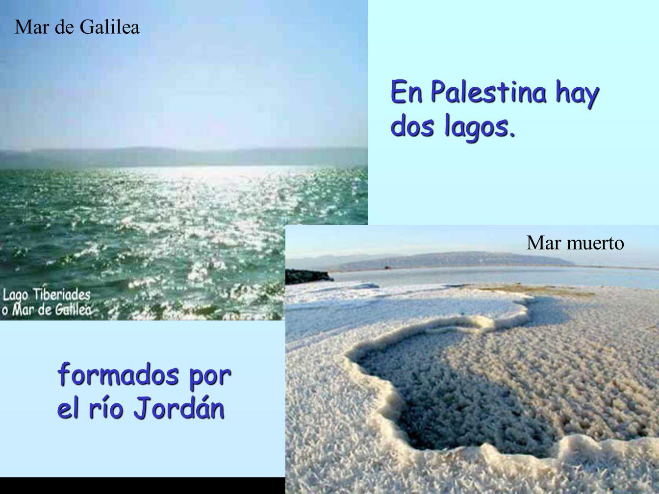 Resultado de imagen de Dos Mares en Palestina