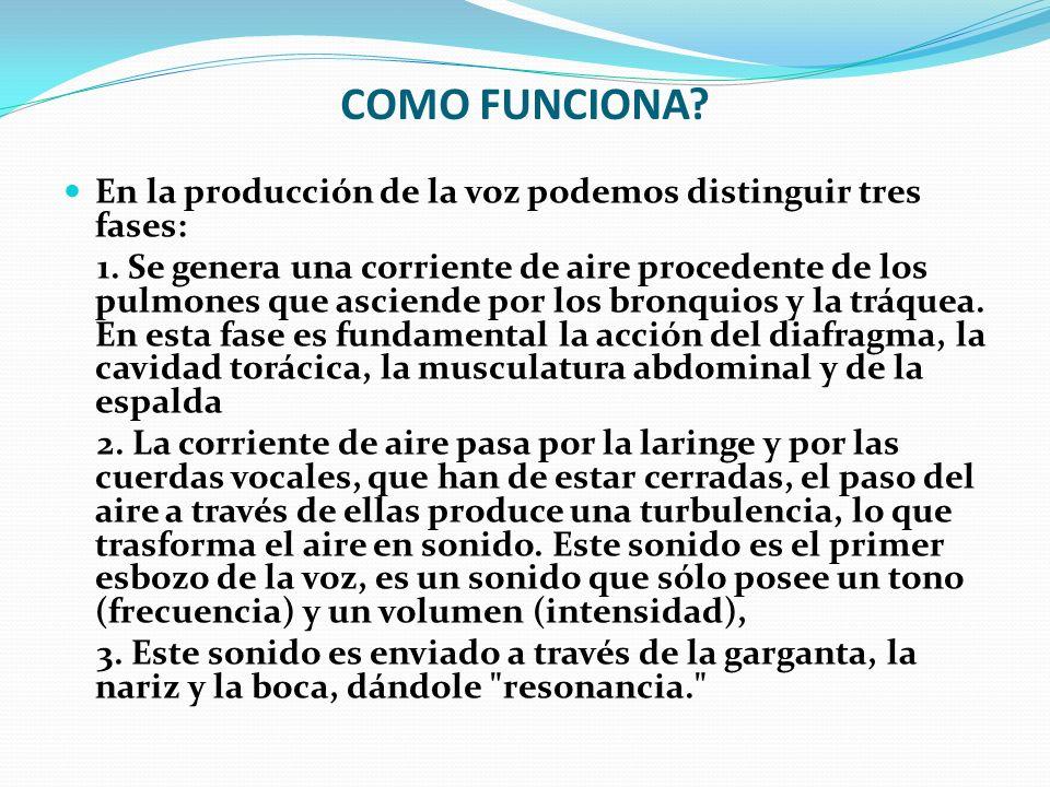 Perfecto Anatomía De La Voz Ilustración - Anatomía de Las ...