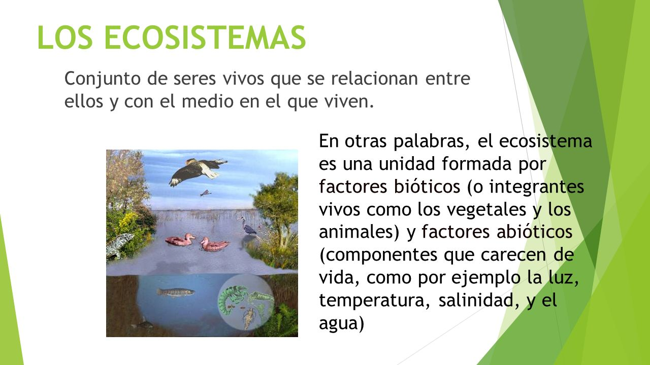 LOS ECOSISTEMAS  - ppt video online descargar