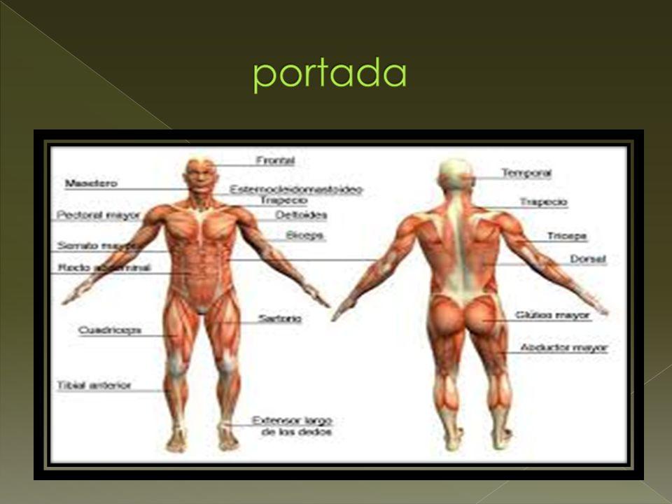 Sistema Muscular Nombre: Bryan NOVOA Y MATIAS GODOY FECHA: 01/09 ...