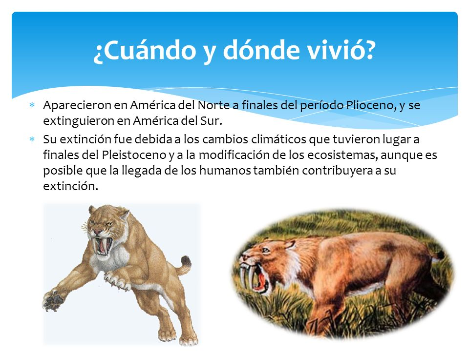 Smilodon Tigre Dientes De Sable Ppt Video Online Descargar
