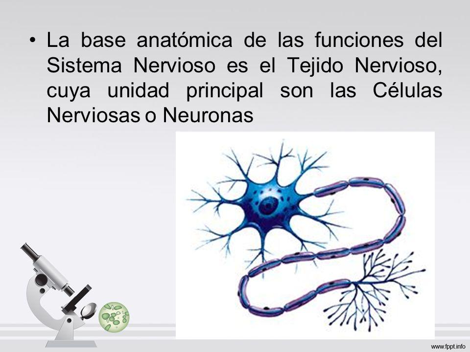 El Sistema Nervioso es el responsable de la Percepción y ...