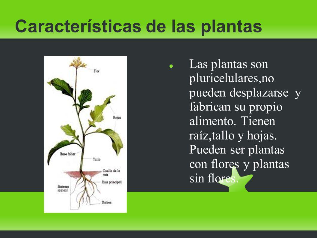 Las plantas las plantas la nutrici n de las plantas for Los arboles y sus caracteristicas