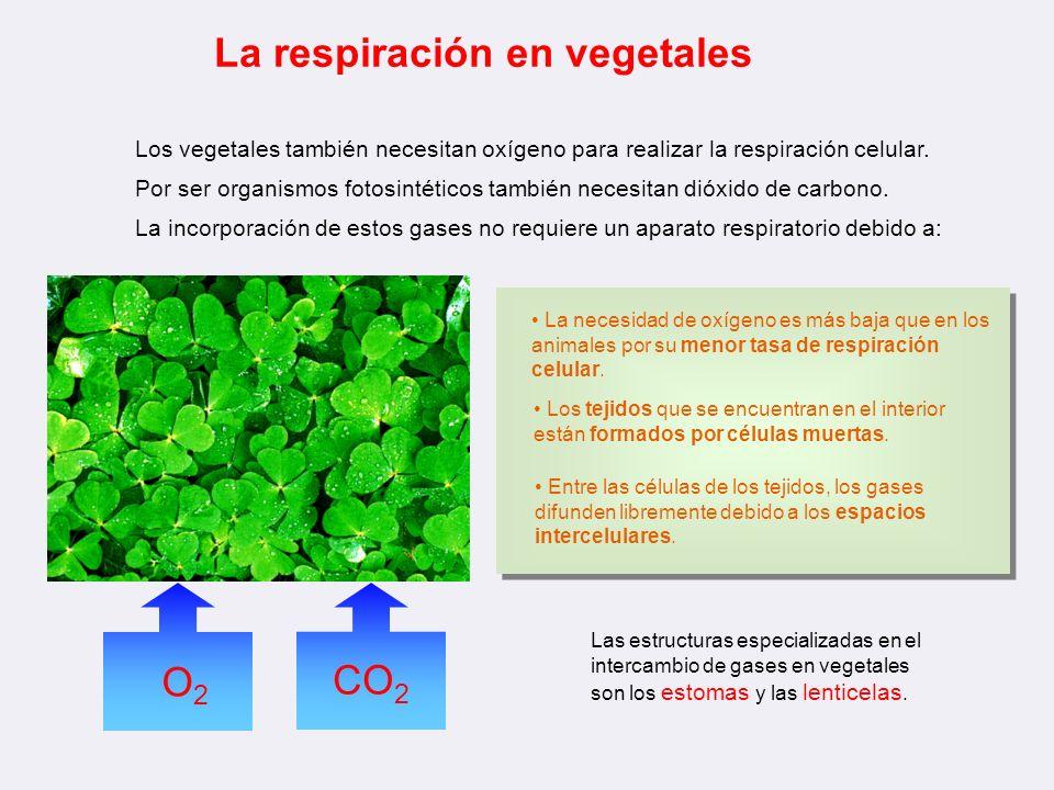 Apoyo Gráfico Nutrición Vegetal Ppt Descargar