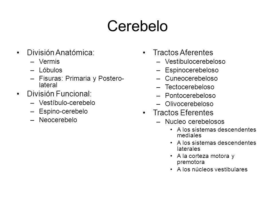 Cerebelo y Ganglios Basales - ppt video online descargar